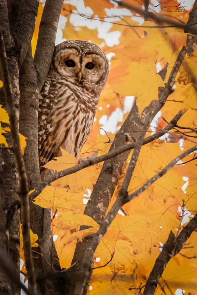 Eyes of Autumn