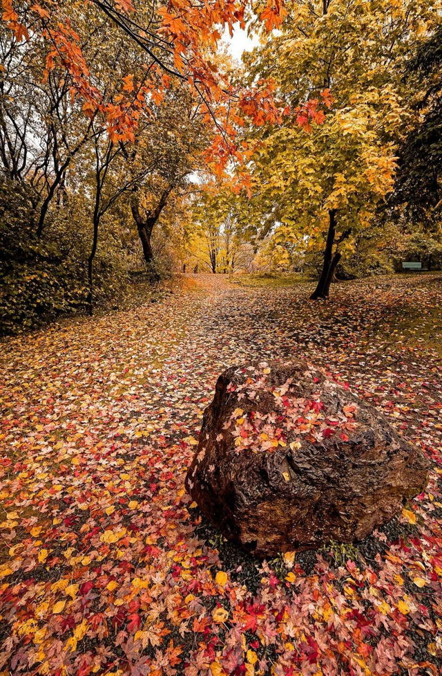 Autumn Rock