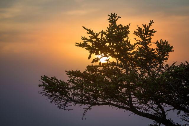 Tuckamore sunset