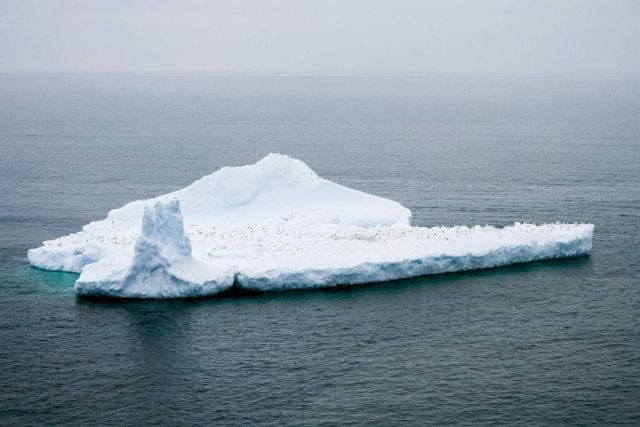 Iceberg 0797