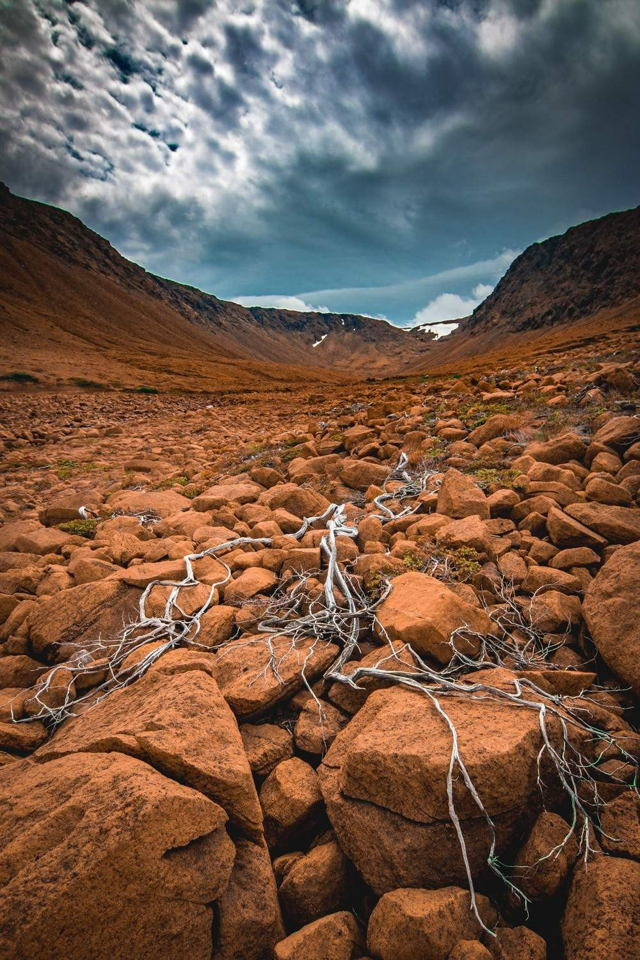 Rooted in the Tablelands