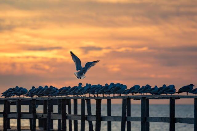 Where Seagulls Cry