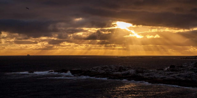 Atlantic Light - Rose Blanche