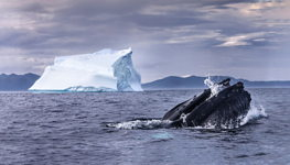 Whale And Iceberg
