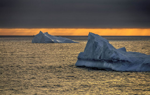 The Morning Bergs