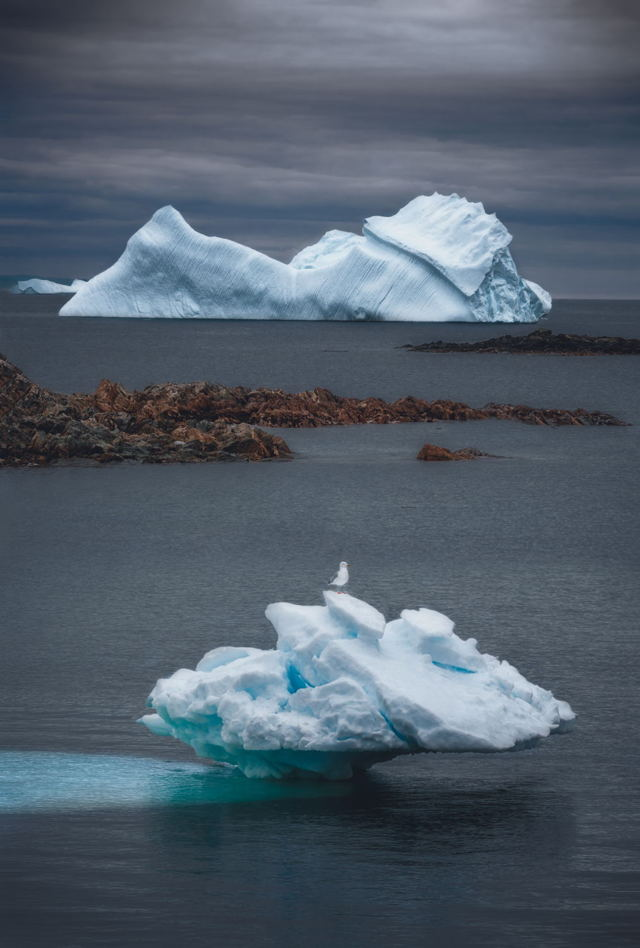 Seagull and the Iceberg