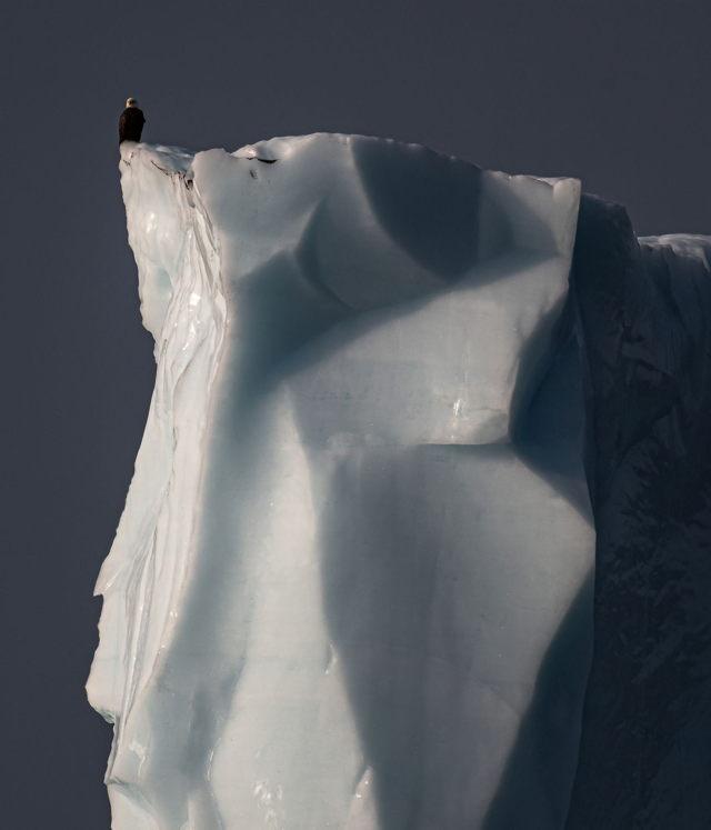 Iceberg Eagle