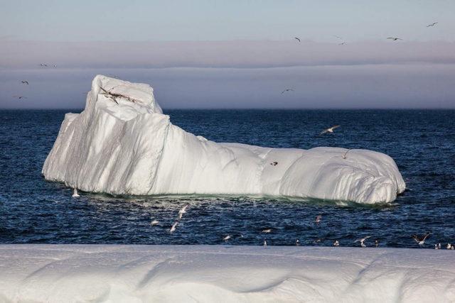Quidi Vidi Iceberg 1998