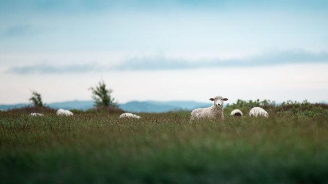 Can I Help Ewe