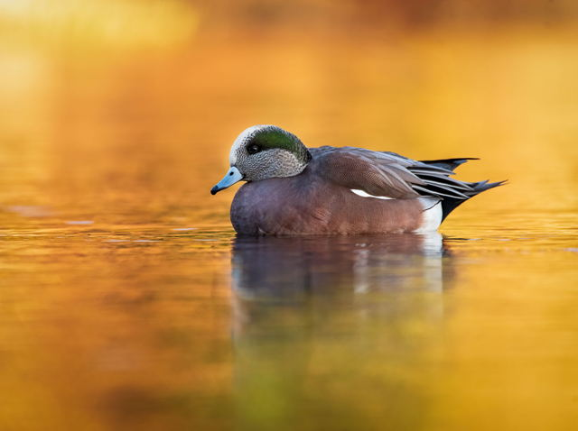 Golden Morning on the Pond