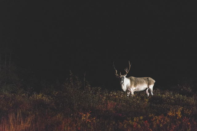 Visitor in the Night