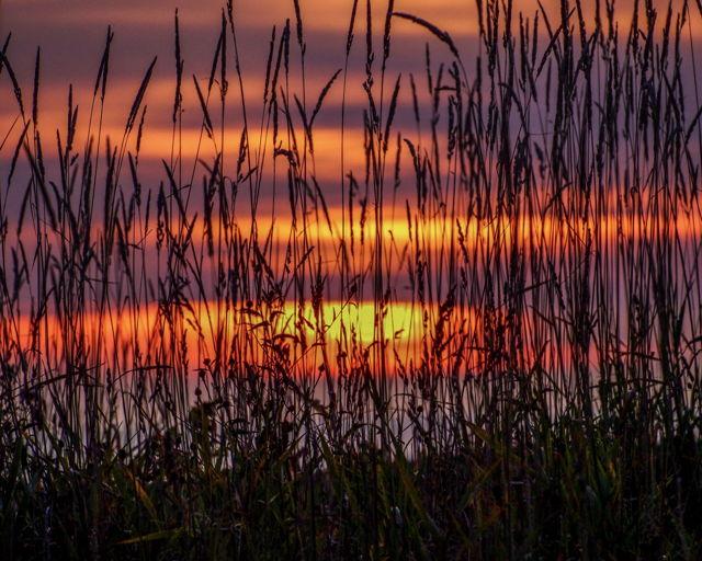 Sunrise through the grass
