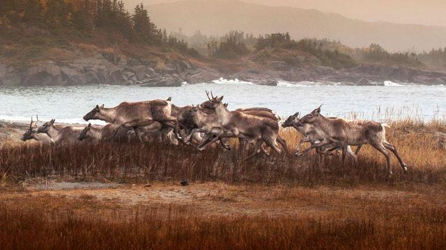 Caribou Caucus 2