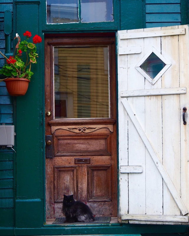 Downtown door and cat