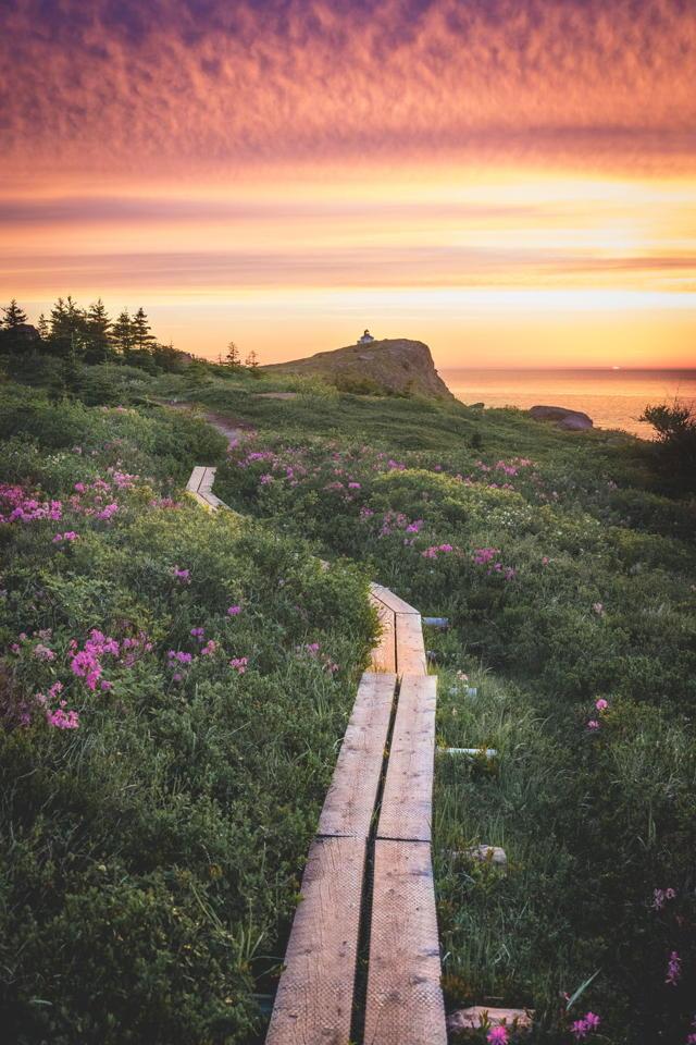 Cape Spear Path