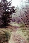 Foggy Pathway
