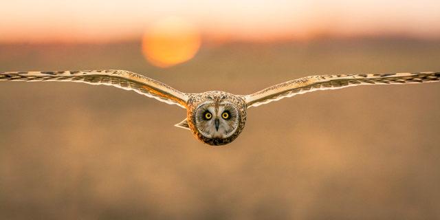 Evening Hunter