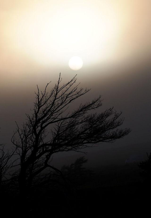 Sun rising over the Tuckamore tree