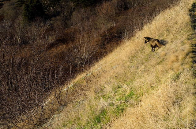A Quick Brown Fox