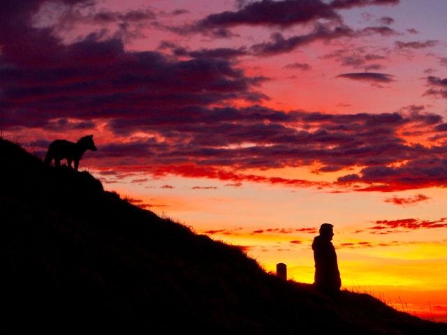 Fox and man at dawn