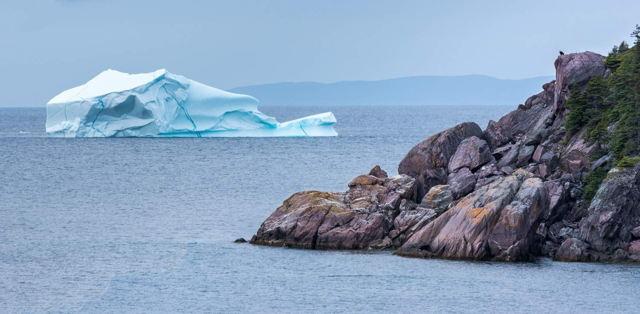 Eagle Watching Iceberg