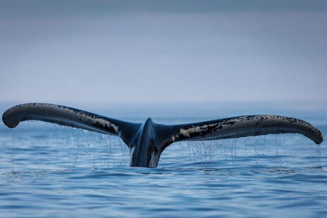 Trinity Whale 3