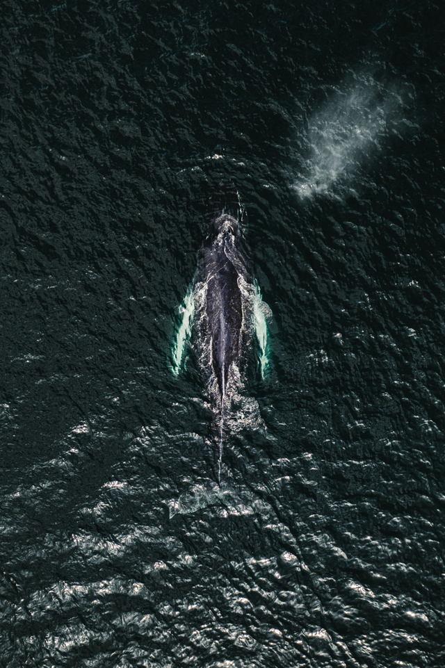 Whale's-Eye View