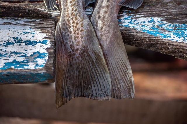 Cod Tail