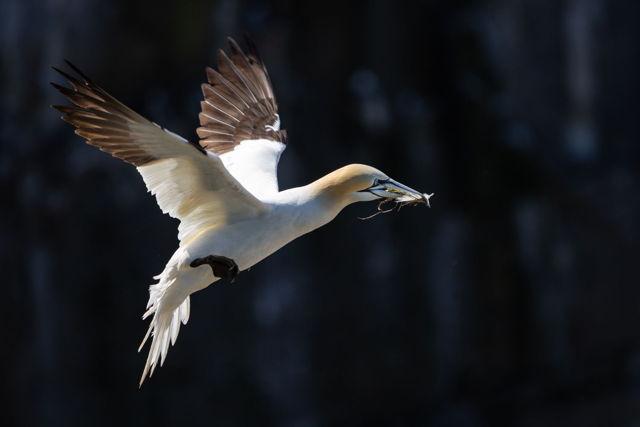 Gannet Flight 5