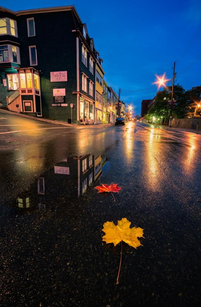 Duckworth Street Autumn