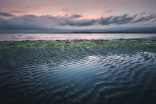Organic Tide