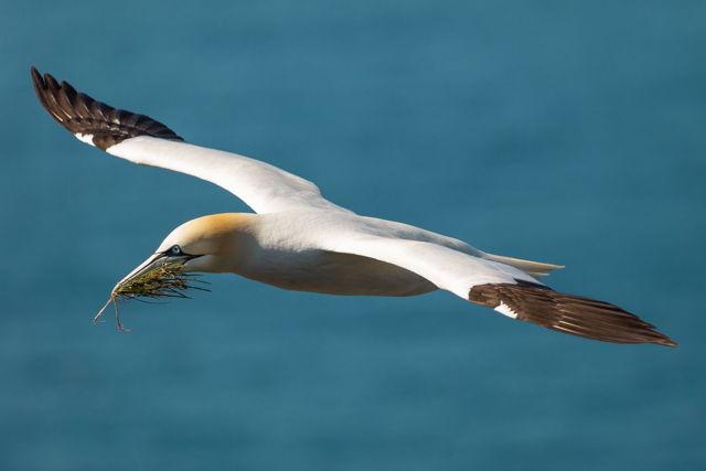 Gannet Flight 4