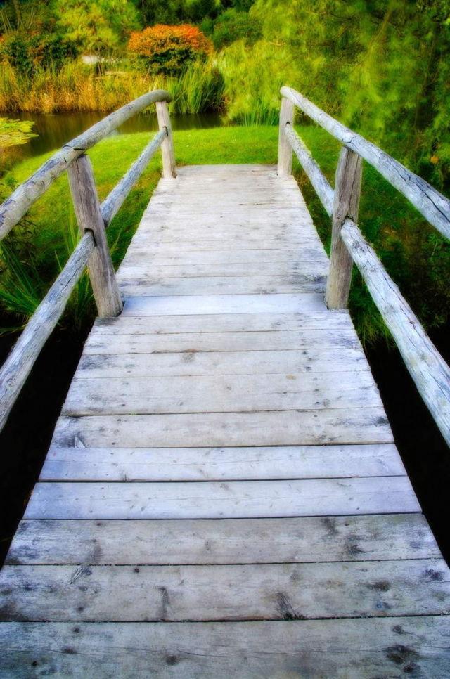 Bridge to Contemplation