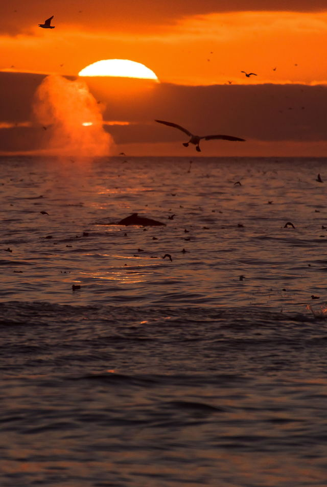 1 Witlessbay Sunrise