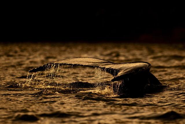 Trinity Whale