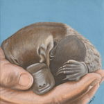 Aidan's Platypus