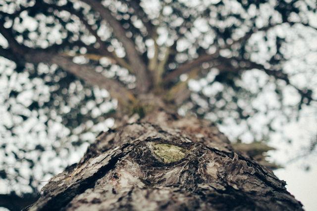 Tree in St. John's