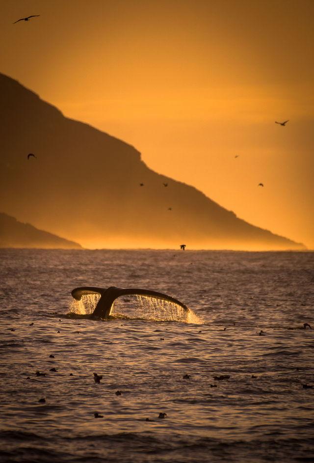 1 ba4 Witlessbay Whale Sunrise