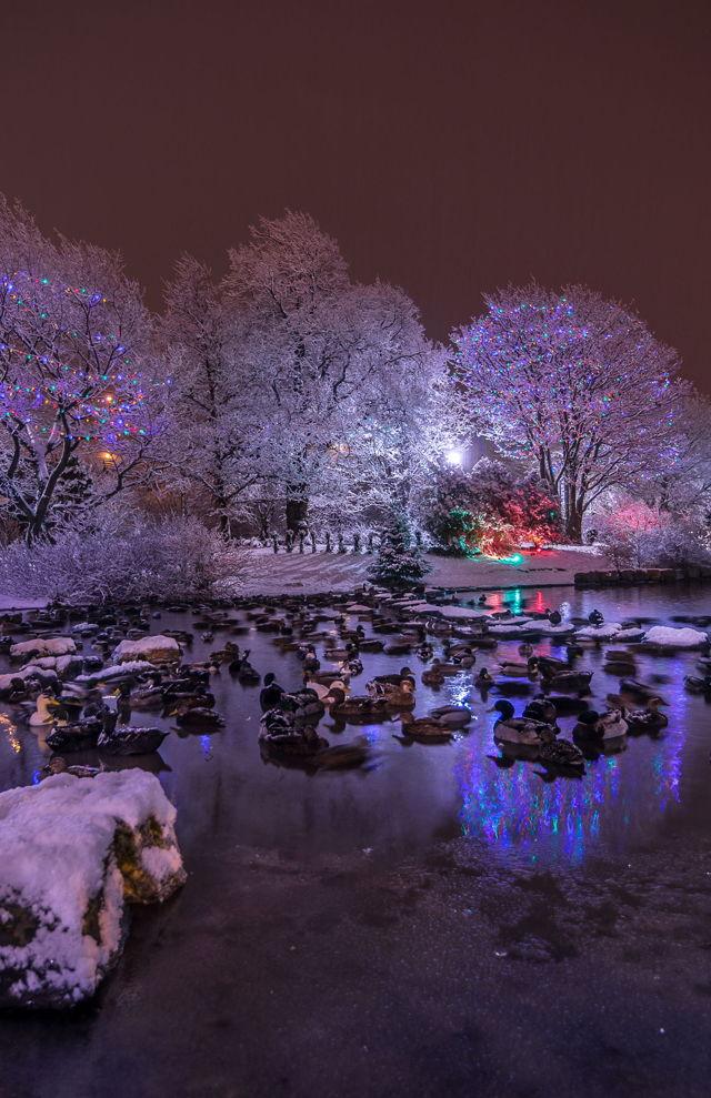Bowring Park Christmas