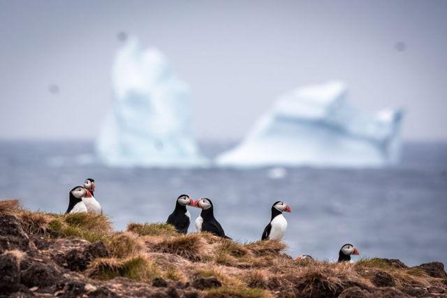 Iceberg Kisses