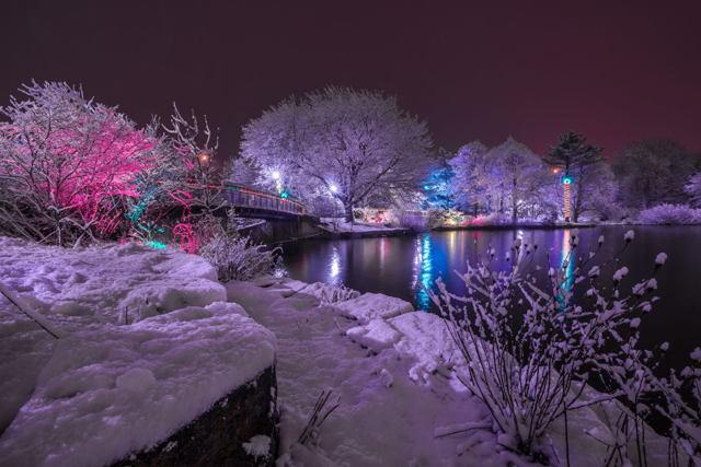 1 Natures Christmas