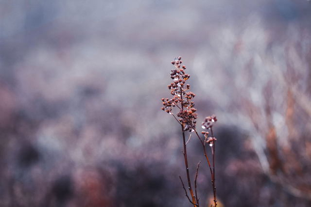 Flowers in the Fog - Landscape